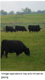 Nitrogen applications may allow for earlier grazing