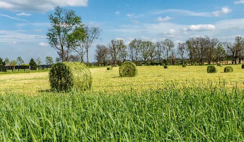 Harvest excess pasture as hay or haylage.