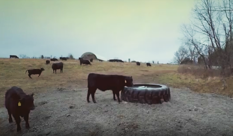 Installing Tire Tanks for Watering Livestock video
